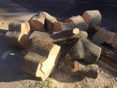 Figure 1. Firewood left behind from tree care operations can harbor pests. (Credit: Karey Windbiel-Rojas)
