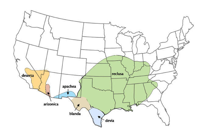 Range of the brown recluse spider in the United States. (Credit: Rick Vetter, UCR)