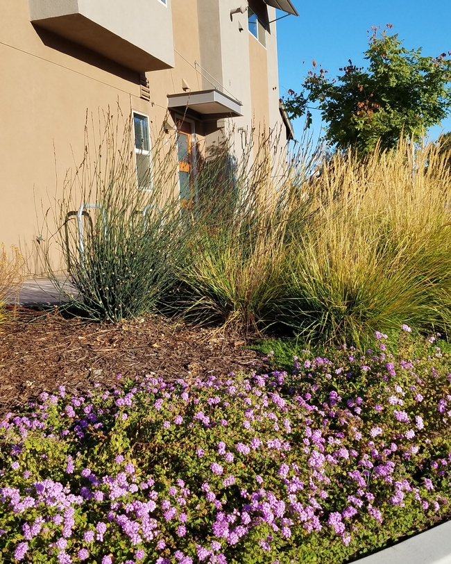 Home landscape with woody mulch (Credit: Belinda Messenger Sikes) for Pests in the Urban Landscape Blog