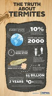 Termite Awarness Week Infographic