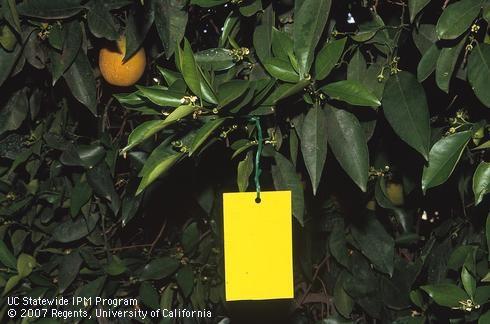 1. for Pests in the Urban Landscape Blog