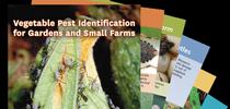 Vegetable Pest Identification cards for Pests in the Urban Landscape Blog