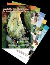Vegetable Pest Identification cards