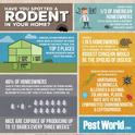 rodent awareness infographic