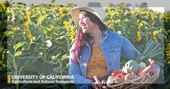 Woman in Sunflowers with Basket