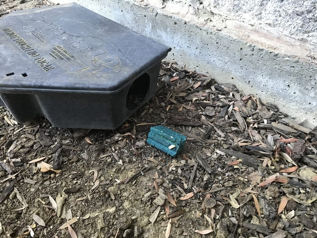 A black rodent bait station on bark mulch with a teal block bait sitting outside the entrance.