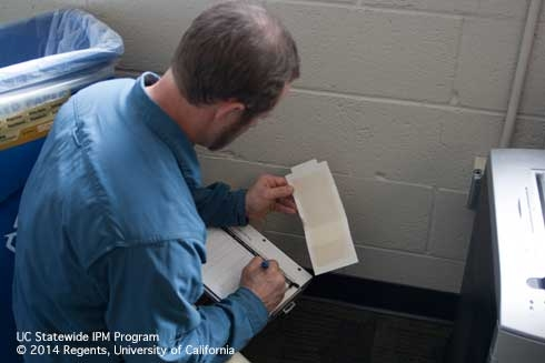 Man crouched down examining sticky trap in an office setting.