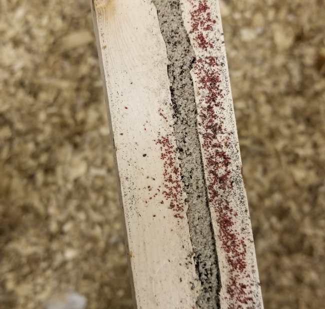 Poultry red mites on a perch in a chicken coop.
