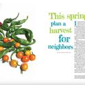 harvest for neighbors