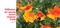 2coastside mag for UC Master Gardeners of San Mateo & San Francisco Counties Blog