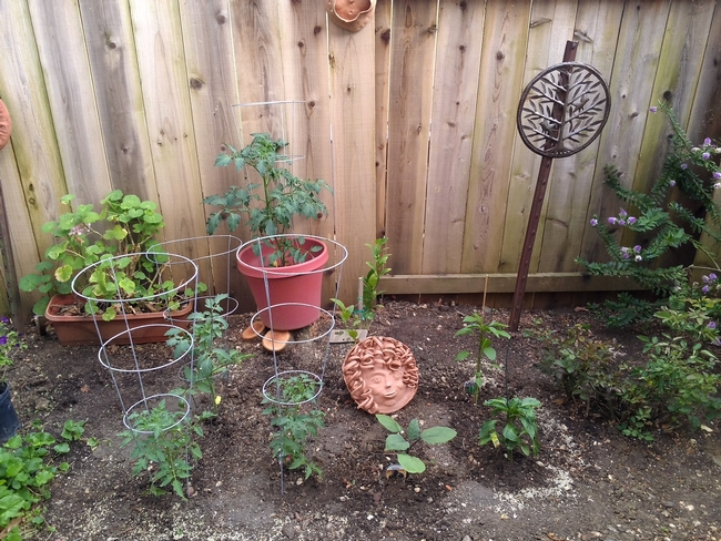 The new vegetable garden. (photo by Toni Greer)