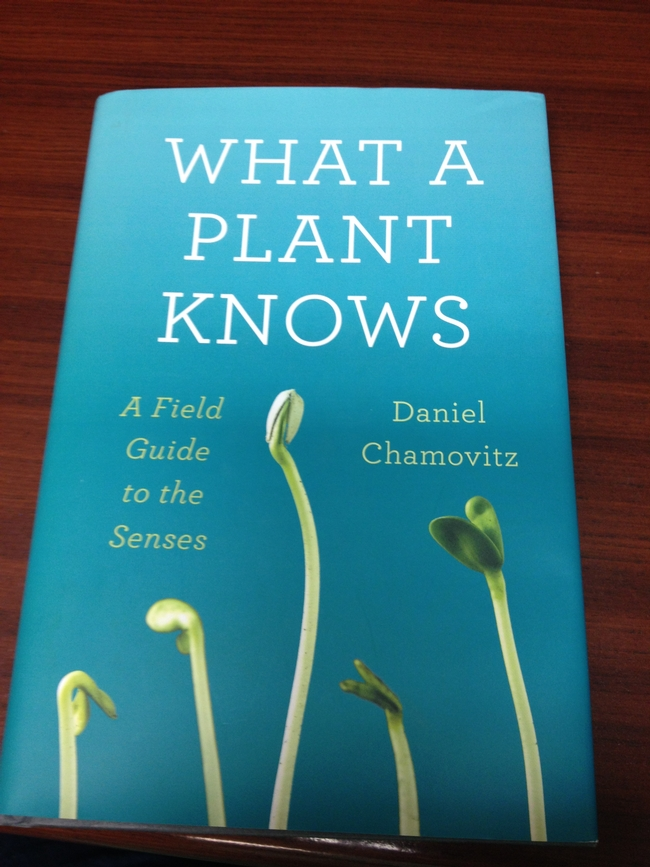 book cover what a plant knows