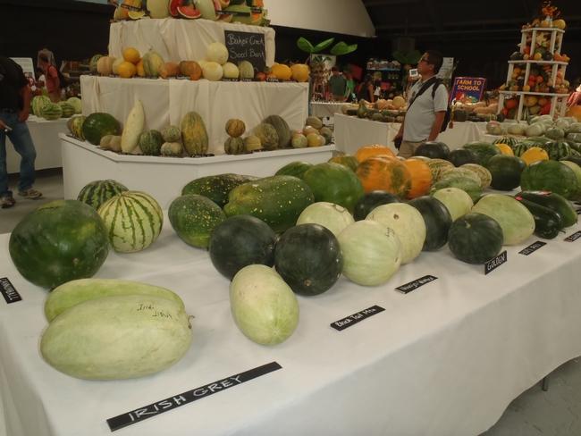 Melon varieties.