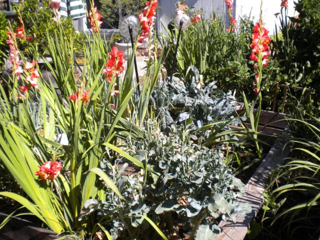 Glads and broccoli and kale.