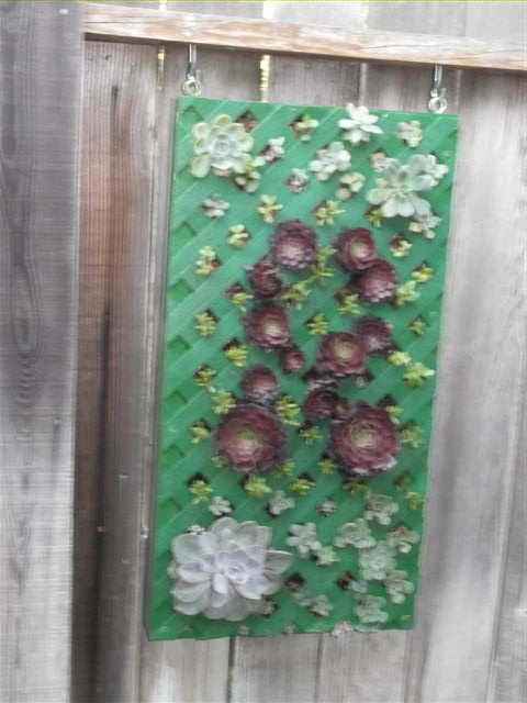 Sorry, picture a little blurry, but it's the start of the succulent box. (photos by Sharon Rico)
