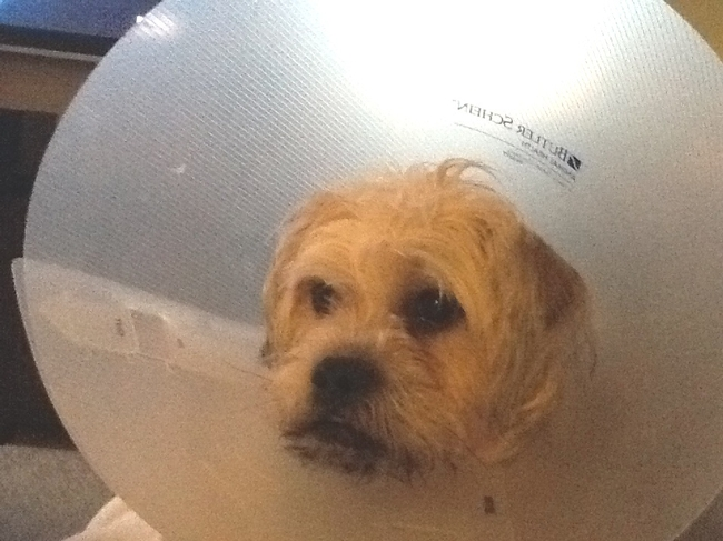 Poor conehead! (photo by JoEllen Myslik)