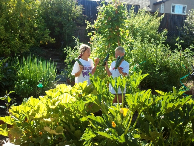 Alexis and Ethan harvest zucchini. (photo by Sarah Trimble)