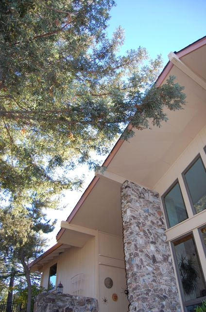 Redwood boughs hang over the roofline of this Vacaville home. Time to call a certified arborist! (photo by Kathy Thomas-Rico)