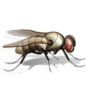 Fly. (courtesy of the Word Clip Art Gallery online)