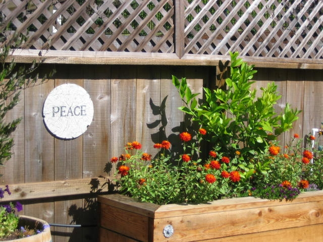 Citrus in a raised bed surrounded by Zinnia.