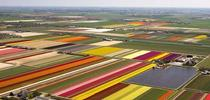 Tulip fields. Photo courtesy of style-files.com for Under the Solano Sun Blog