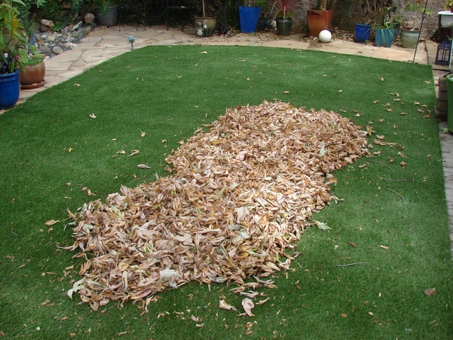 Gathered leaves before vacuuming. (photos by Ken Williams)