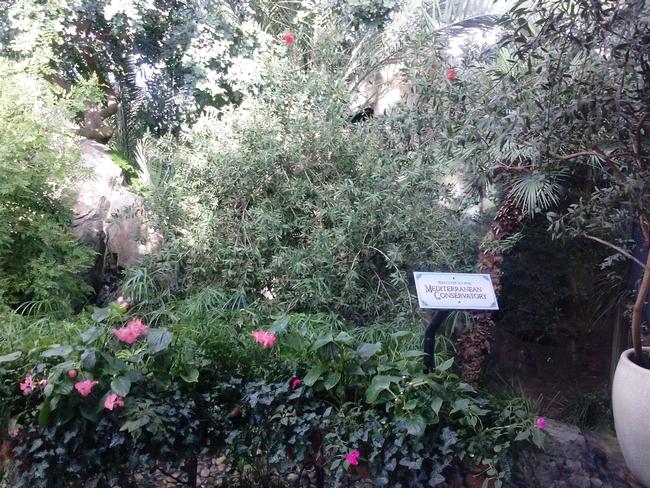 Mediterranean Conservatory