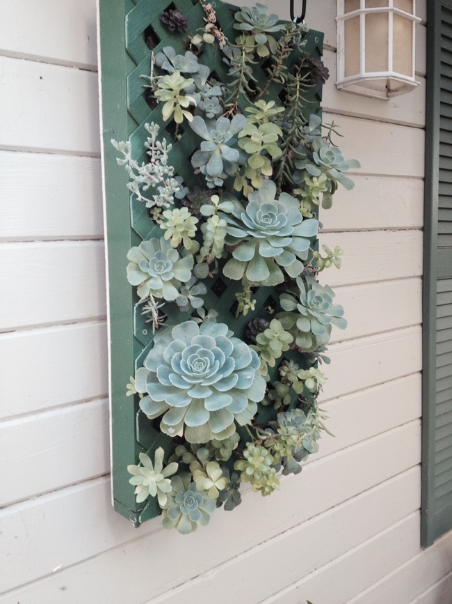 Succulent wall. (Photos by Sharon Rico)