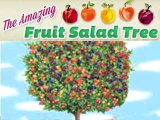 You Too Can Have A Fruit Salad Tree Under The Solano Sun Anr