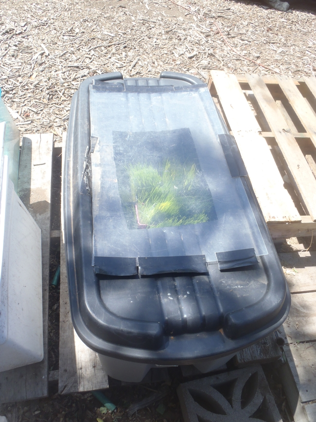 Converted rubber tub is used as a cold frame.