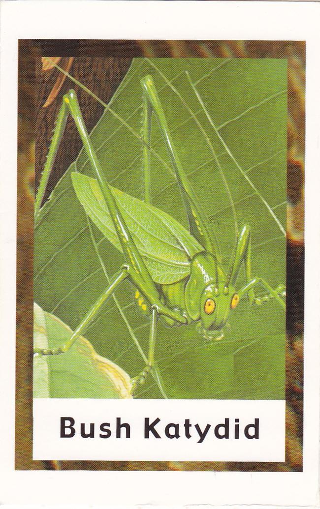 Bug Bingo card. (photos by Launa Herrmann)