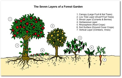 seven layers of a forest