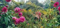 monets garden book cover vivian russell for Under the Solano Sun Blog