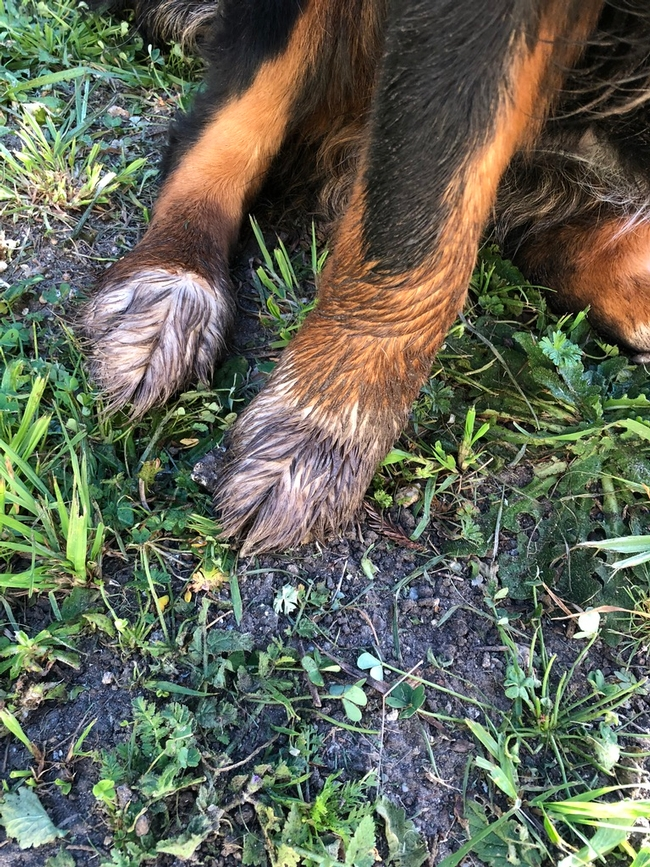 Large paws act as shovels