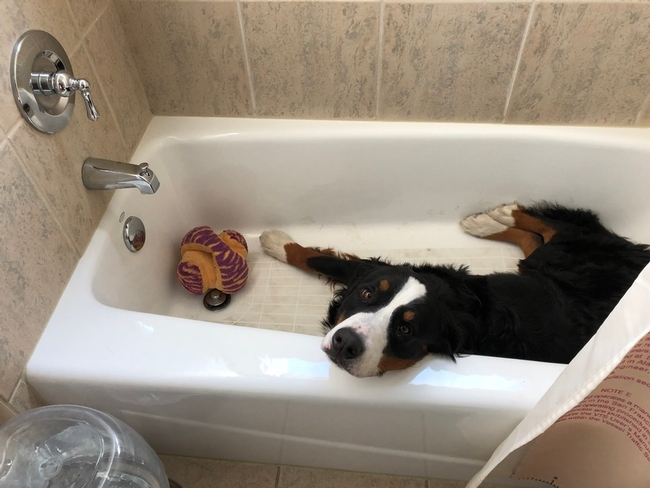 Roxy's preferred place to cool off...
