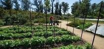 garden for Under the Solano Sun Blog