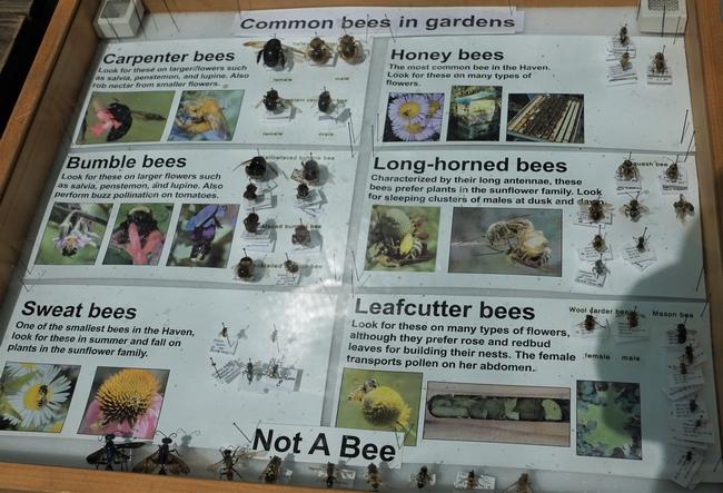 Picture of Bee Display at Haagen-Dazs Bee Haven