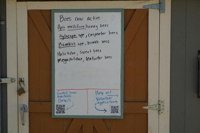 Sign identifying active bees June 2019 Haagen-Dazs Bee Haven