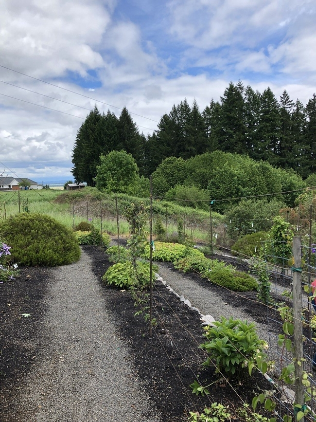 Clematis garden
