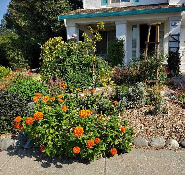 Community Front Yard Garden