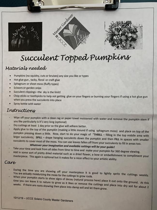 instructions succy pumpkin