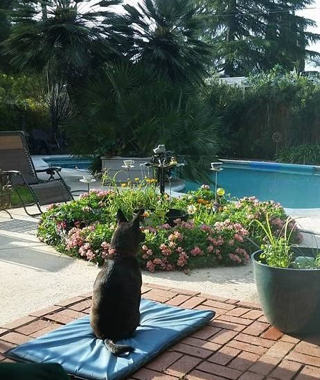 Suzy Q enjoying the Alstroemeria in the day time