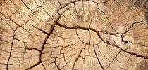 tree slice for Under the Solano Sun Blog