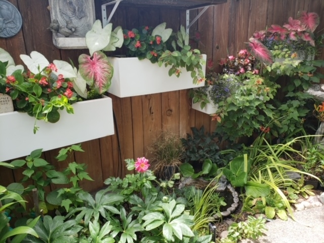 PVC planters mounted on fence.