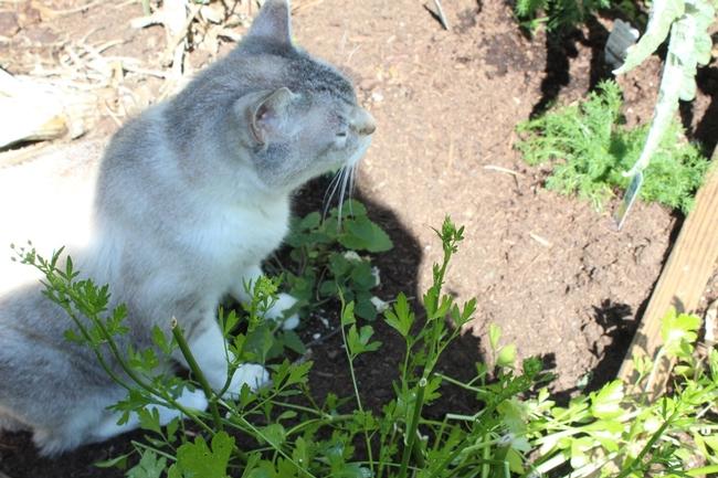 Sparkle sits on the catnip.