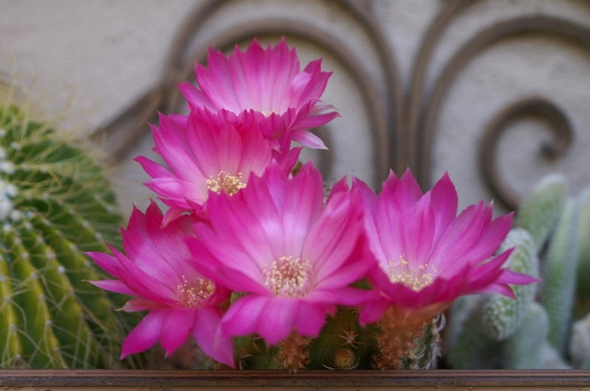 Cacti in a wall container (Photo by Emily Rued)