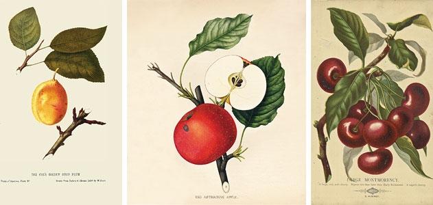 fruit-prints-631
