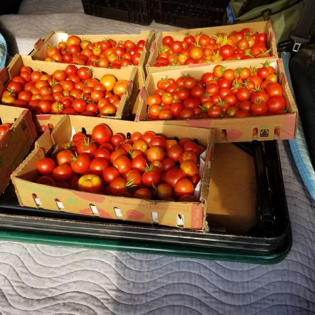 tomatoes project produce tina paris 2021 (2)