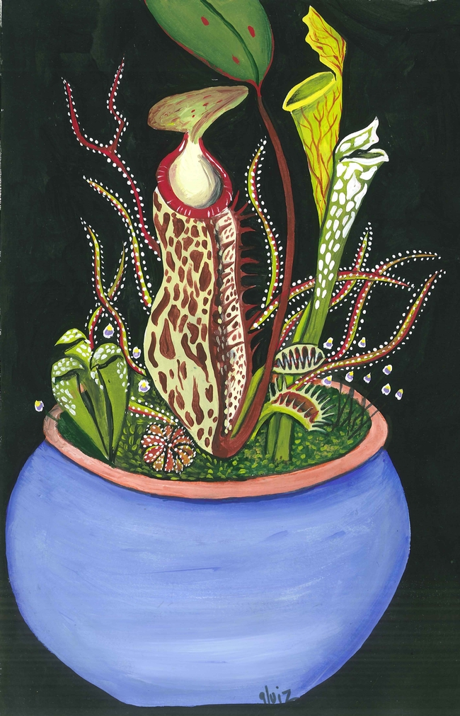 colorful drawing of carnivorous plants depicted as pitcher plant, Venus flytrap, sundew