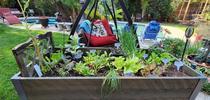 Winter Lettuce & Spinach Garden - photos by Paula Pashby for Under the Solano Sun Blog